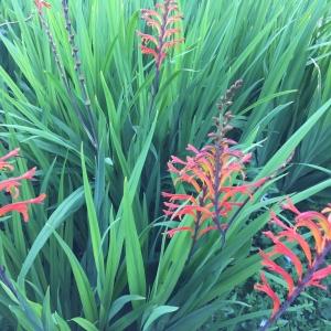 flora atlántica